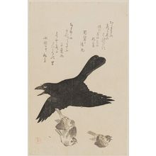 Kubo Shunman: Raven and Sparrows - Museum of Fine Arts