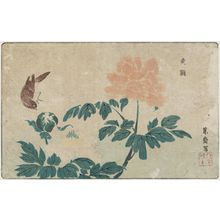 Kitao Masayoshi: Bird and Peonies - Museum of Fine Arts