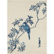 Katsukawa Shunko: Finch on Aronia Branch - Museum of Fine Arts