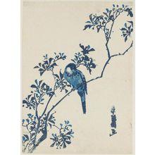 勝川春好: Finch on Aronia Branch - ボストン美術館