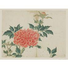 Kikugawa Eizan: Peonies - Museum of Fine Arts