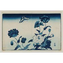 Kikugawa Eizan: Poppies and Butterfly - Museum of Fine Arts