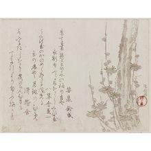 Ryuryukyo Shinsai: Plum Tree - Museum of Fine Arts