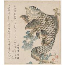 Totoya Hokkei: Carp and Seaweed - Museum of Fine Arts