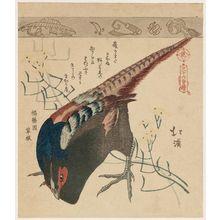 Totoya Hokkei: Pheasant and yellow plant (mustard?) Sanju-rokkai Zukushi - Museum of Fine Arts