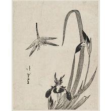 Katsushika Hokuga: Iris and Dragonfly - Museum of Fine Arts