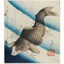 Katsushika Taito II: Carp in Water - ボストン美術館