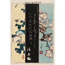 Katsushika Taito II: Finches on a Cherry Branch, Rubbing of Calligraphy of Kumagai Naozane (Kumagai Renshôbô shinseki), and Morning Glories and Bee, from the series Mirror of Calligraphy and Paintings, Old and New (Kokon shoga kagami) - Museum of Fine Arts