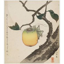 Katsushika Hokusai: Grasshopper and Persimmon - Museum of Fine Arts