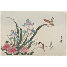 Katsushika Hokusai: Iris, Peonies, Sparrows, and Dragonfly - Museum of Fine Arts