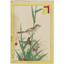Nakayama Sûgakudô: No. 13 from the series Forty-eight Hawks Drawn from Life (Shô utsushi yonjû-hachi taka) - ボストン美術館