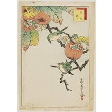 Nakayama Sûgakudô: No. 35, Japanese White-eye and Persimmon (Mejiro kaki), from the series Forty-eight Hawks Drawn from Life (Shô utsushi yonjû-hachi taka) - ボストン美術館