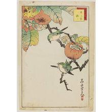 Nakayama Sûgakudô: No. 35, Japanese White-eye and Persimmon (Mejiro kaki), from the series Forty-eight Hawks Drawn from Life (Shô utsushi yonjû-hachi taka) - Museum of Fine Arts