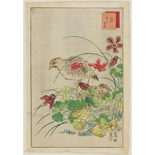 Nakayama Sûgakudô: No. 9 from the series Forty-eight Hawks Drawn from Life (Shô utsushi yonjû-hachi taka) - ボストン美術館