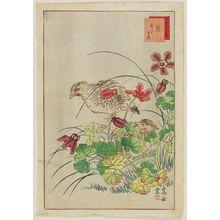 Nakayama Sûgakudô: No. 9 from the series Forty-eight Hawks Drawn from Life (Shô utsushi yonjû-hachi taka) - Museum of Fine Arts