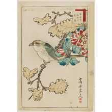 Nakayama Sûgakudô: No. 38, from the series Forty-eight Hawks Drawn from Life (Shô utsushi yonjû-hachi taka) - Museum of Fine Arts