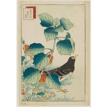 Nakayama Sûgakudô: No. 33 from the series Forty-eight Hawks Drawn from Life (Shô utsushi yonjû-hachi taka) - ボストン美術館