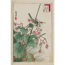 Nakayama Sûgakudô: No. 27, Bluebird and Begonia (Ruribitaki, shûkaidô), from the series Forty-eight Hawks Drawn from Life (Shô utsushi yonjû-hachi taka) - Museum of Fine Arts