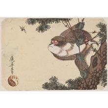 Rokubei: Monkey clinging to a vine on a pine tree and watching a wasp - Museum of Fine Arts