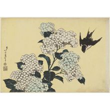 Katsushika Hokusai: Hydrangeas and Swallow, from an untitled series known as Large Flowers - Museum of Fine Arts