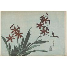 葛飾北斎: Orange Orchids, from an untitled series known as Large Flowers - ボストン美術館