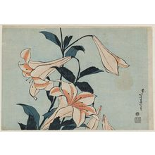 Katsushika Hokusai: Lilies, from an untitled series known as Large Flowers - Museum of Fine Arts