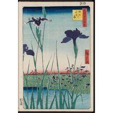 歌川広重: Horikiri Iris Garden (Horikiri no hanashôbu), from the series One Hundred Famous Views of Edo (Meisho Edo hyakkei) - ボストン美術館