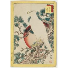 Nakayama Sûgakudô: No. 1, White Falcon and Five-needled Pine (Shirotaka goyô no matsu), from the series Forty-eight Hawks Drawn from Life (Shô utsushi yonjû-hachi taka) - ボストン美術館