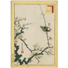 Nakayama Sûgakudô: No. 2, Warbler and White Plum (Uguisu hakubai), from the series Forty-eight Hawks Drawn from Life (Shô utsushi yonjû-hachi taka) - Museum of Fine Arts