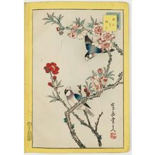 Nakayama Sûgakudô: No. 5, Finches and Peach Blossoms (Bundori momo no hana), from the series Forty-eight Hawks Drawn from Life (Shô utsushi yonjû-hachi taka) - Museum of Fine Arts