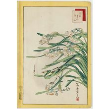 Nakayama Sûgakudô: No. 37, Wagtail and Narcissus (Sekirei suisen), from the series Forty-eight Hawks Drawn from Life (Shô utsushi yonjû-hachi taka) - Museum of Fine Arts