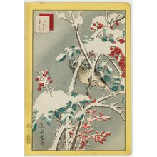 Nakayama Sûgakudô: No. 45, Bulbul and Nandina (Hiyodori nanten), from the series Forty-eight Hawks Drawn from Life (Shô utsushi yonjû-hachi taka) - ボストン美術館