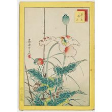 Nakayama Sûgakudô: No. 16, Sparrows and Poppies (Suzume keshi), from the series Forty-eight Hawks Drawn from Life (Shô utsushi yonjû-hachi taka) - ボストン美術館