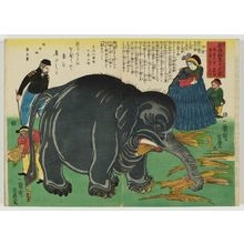 Utagawa Yoshitoyo: Great Elephant Recently Imported from Overseas (Shin tohakurai no dai zô) - Museum of Fine Arts