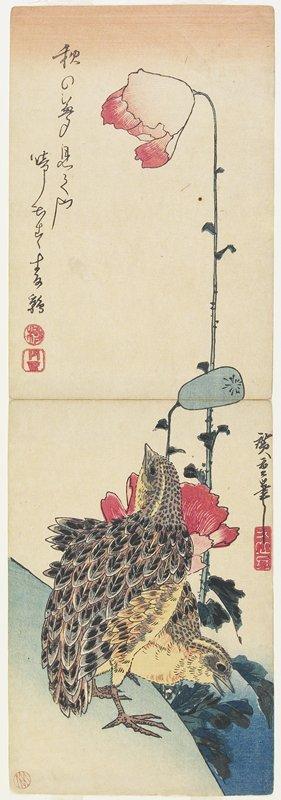 歌川広重: (Quail and Poppies) - ミネアポリス美術館