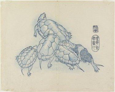 Yamada Ho_gyoku: (Turtles) - Minneapolis Institute of Arts