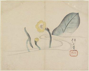 Yamada Ho_gyoku: (Lotus and a Gold Bug) - ミネアポリス美術館