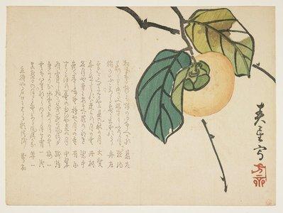 Shunsei: (Persimmon) - Minneapolis Institute of Arts