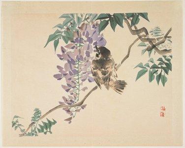 Kono Bairei: (Sparrow on a wisteria branch) - Minneapolis Institute of Arts