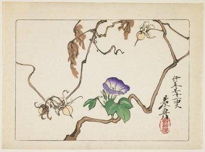 柴田是眞: Vine and Seeds of Morning Glory - ミネアポリス美術館