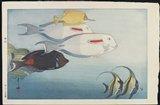 Yoshida Hiroshi: The Honolulu Aquarium - Minneapolis Institute of Arts