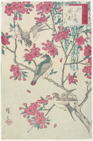 歌川広重: Willow, Cherry Blossoms, Sparrows and Swallow - ミネアポリス美術館