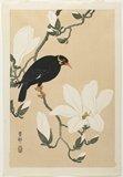 Shoson Ohara: Hill Myna on a Magnolia Branch - ミネアポリス美術館