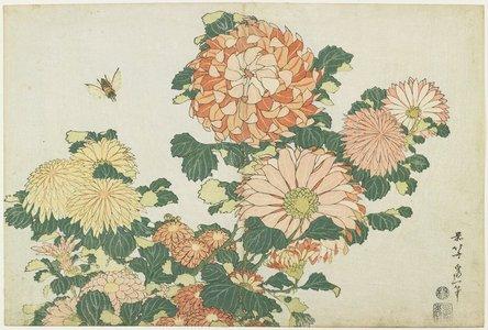 葛飾北斎: Chrysanthemums and Horsefly - ミネアポリス美術館