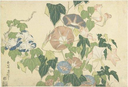 葛飾北斎: Frog and Morning Glories - ミネアポリス美術館
