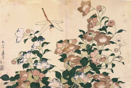 葛飾北斎: Chinese Bellflowers and Dragonfly - ミネアポリス美術館
