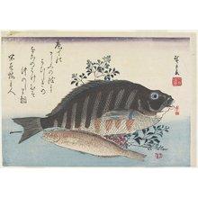 歌川広重: Sea Bream, Sweetfish and Nandina Branches - ミネアポリス美術館