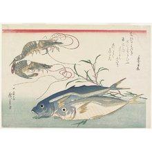 歌川広重: Prawns, Horse Mackerels and Smartweed - ミネアポリス美術館