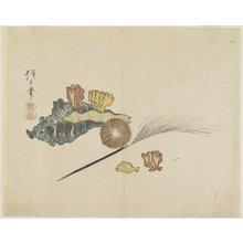 Yamada Ho_gyoku: (Shells) - ミネアポリス美術館