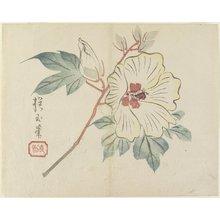 Yamada Ho_gyoku: (Large White Flower) - ミネアポリス美術館
